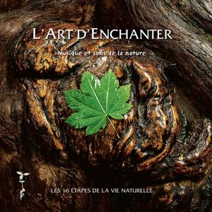 L'art d'enchanter