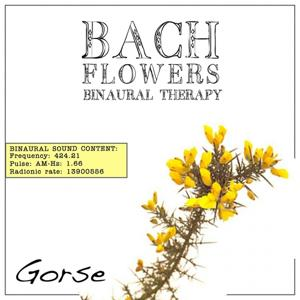 Gorse EFT Dose Therapy (Binaural Real Frequency from Bach Flowers)