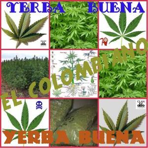 Yerba Buena (La Yerba Buena)