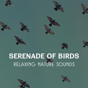 Serenade of Birds – Relaxing Nature Sounds, Healing Music for Peaceful Ambience, Deep Meditation & Sleep